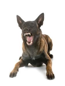 oklahoma city dog bite attorney