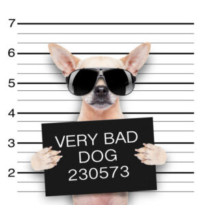 dog bite attorney oklahoma city